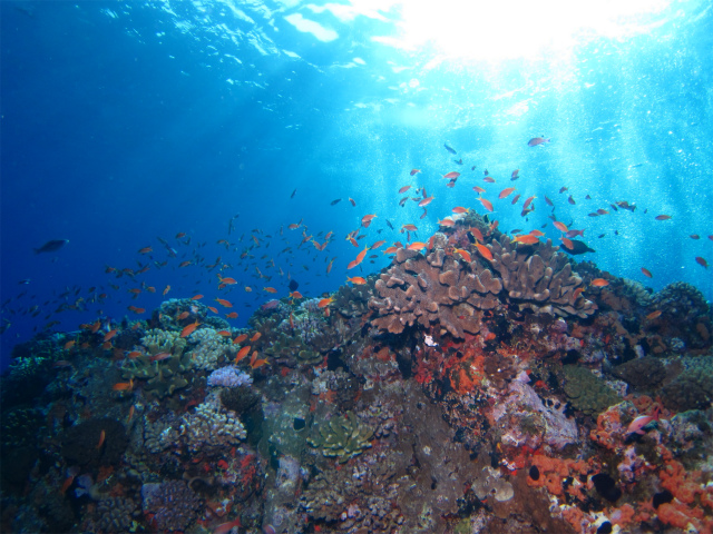 沖縄 ダイビング 粟国 遠征 ドリフトダイビング