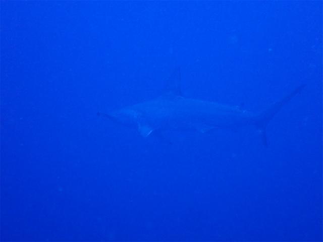 沖縄 ダイビング 観光 ボート 海