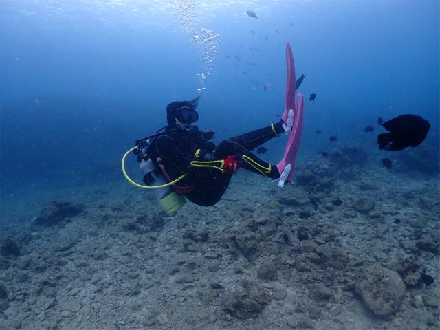 沖縄 ダイビング 海 慶良間 講習