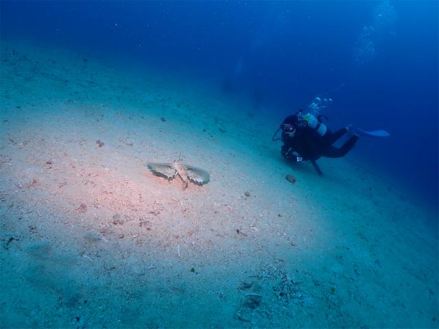 沖縄 ダイビング 万座 FUNダイビング