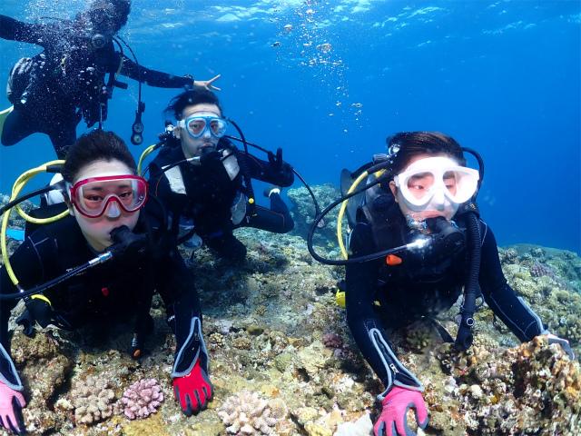 沖縄 ダイビング 海 慶良間 観光