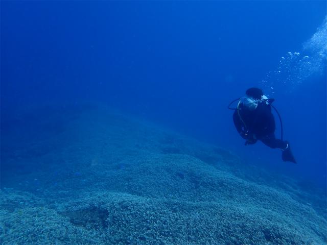 慶良間 沖縄 ダイビング 海 観光
