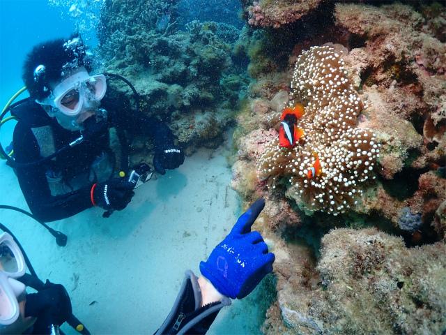 ダイビング 体験 海 観光 沖縄