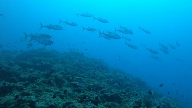 渡名喜 遠征 ダイビング 海 観光