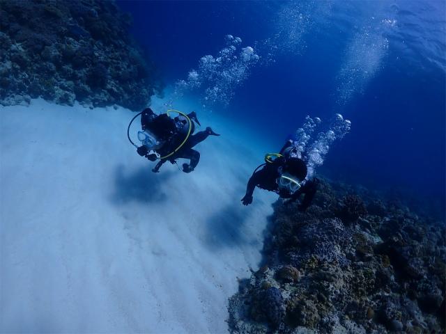 慶良間 FUN 体験 ダイビング 海