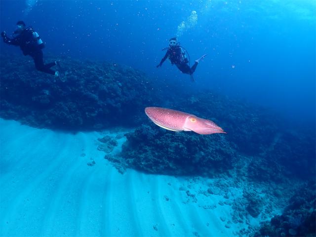 沖縄 ダイビング 自社船 海 観光