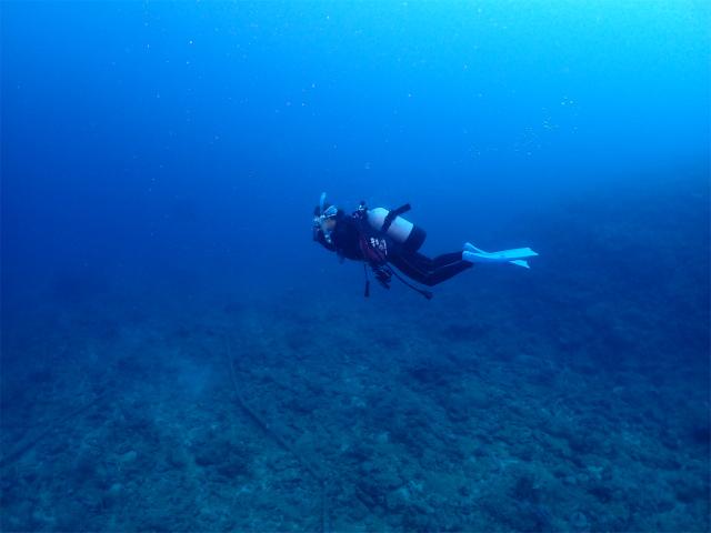 沖縄 ダイビング ウミウシ 本島 ボート