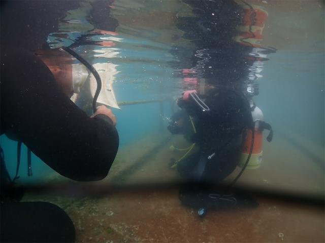 沖縄 ダイビング 講習 海 観光