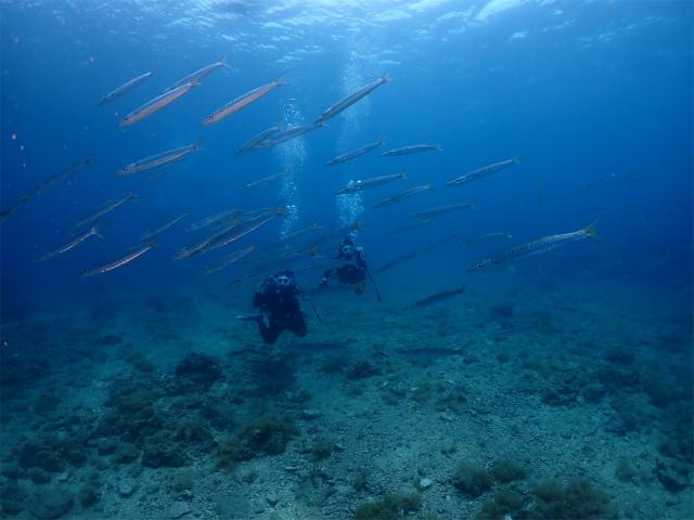 沖縄 観光 ダイビング 海 北谷