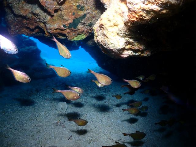 沖縄 ダイビング 観光 海 慶良間