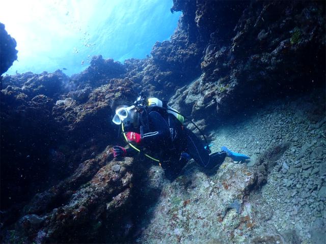 沖縄 近海 ボート ダイビング 観光