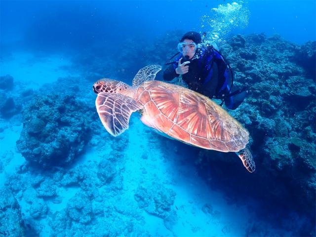沖縄 ダイビング 慶良間 チービシ 観光