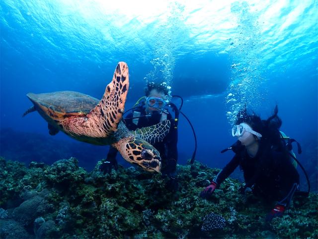慶良間 沖縄 ウミガメ ダイビング 海
