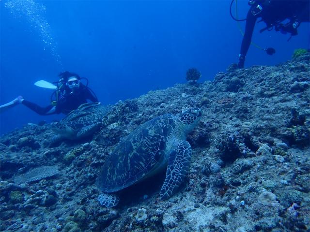 万座 ダイビング 沖縄 観光 海