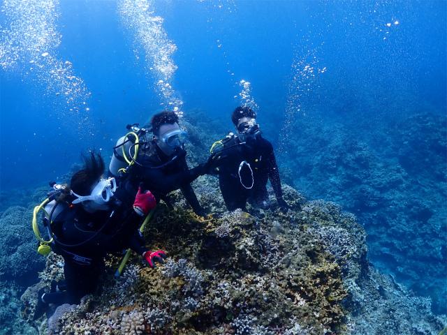 慶良間 ダイビング 体験 観光 海