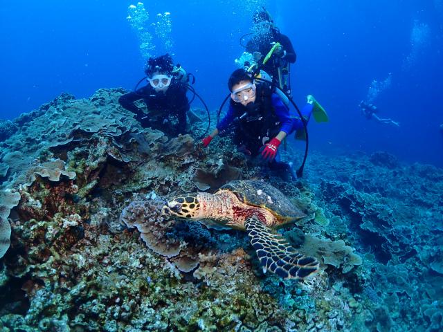 慶良間 体験ダイビング 沖縄 ダイビング 海