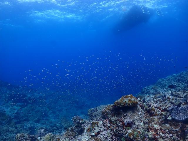 沖縄 観光 ダイビング 宜野湾 海