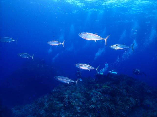 沖縄 慶良間 遠征 ダイビング ライセンス