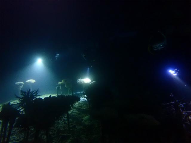 沖縄 サンゴ ナイトダイビング 産卵 ダイビング