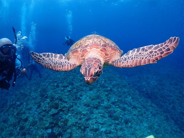 沖縄 ダイビング 慶良間 観光 ライセンス