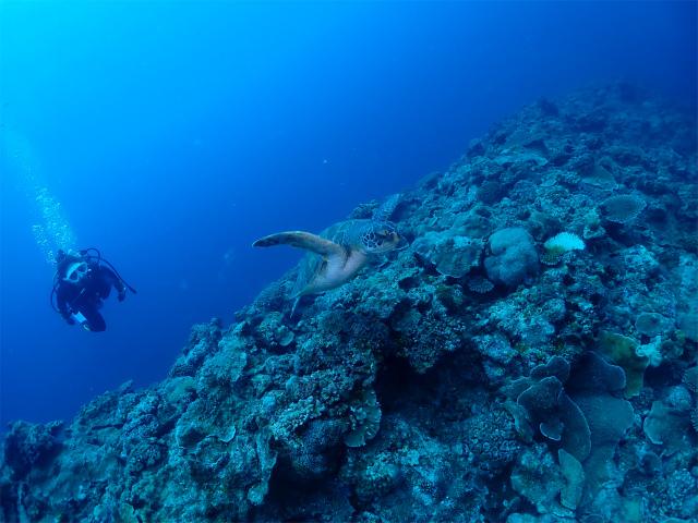恩納村 沖縄 観光 ダイビング 海