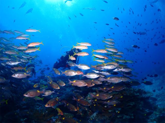 沖縄 慶良間 ダイビング ライセンス 観光