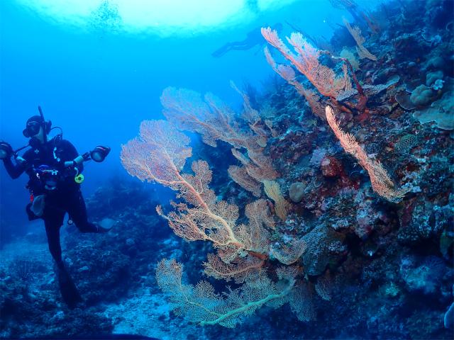 沖縄 ダイビング 慶良間 観光 海
