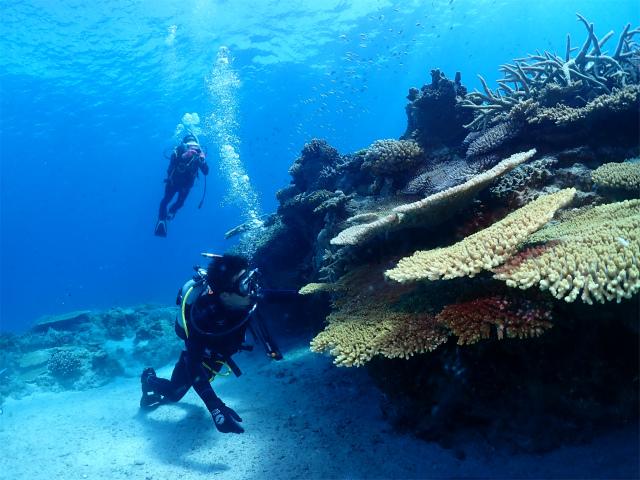 沖縄 チービシ ダイビング 観光 ライセンス