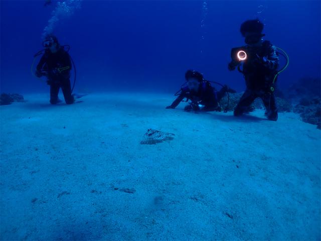 慶良間 沖縄 ダイビング ウミガメ 体験