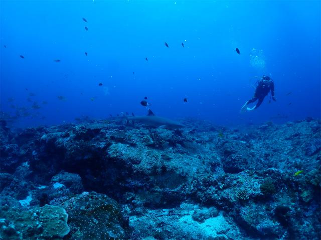 沖縄 チービシ ダイビング FUNダイブ 自社船