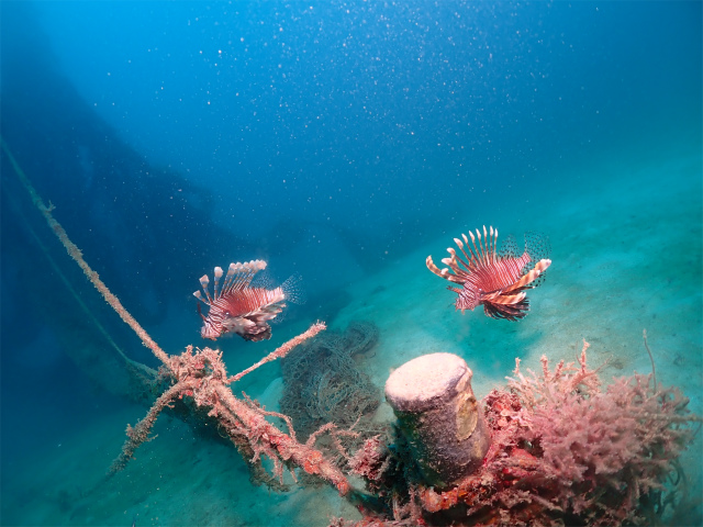 宜野湾 ボート ダイビング 沖縄 観光