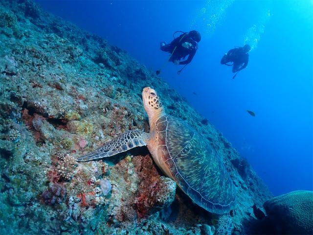 ダイビング 万座 ウミガメ 観光