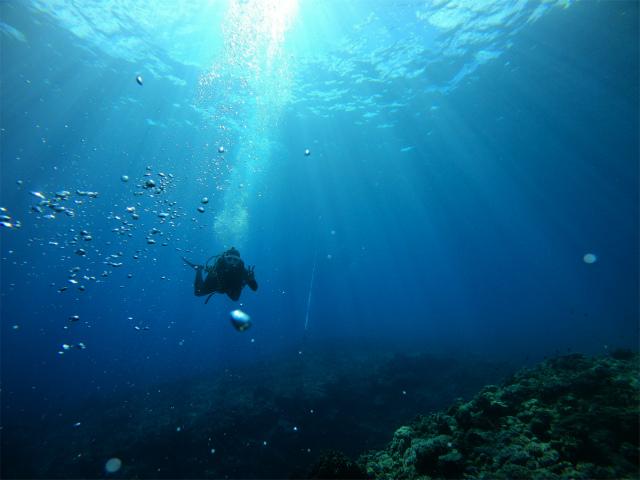 沖縄 ダイビング 慶良間 ボートダイブ 海