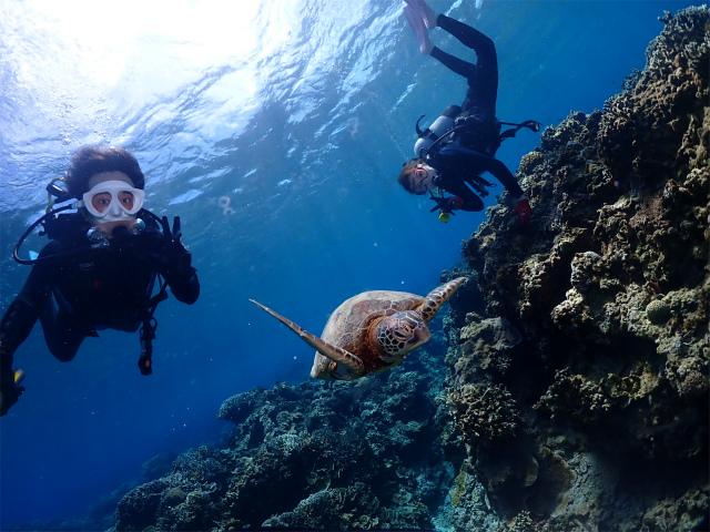 慶良間 ウミガメ 体験 ダイビング 沖縄