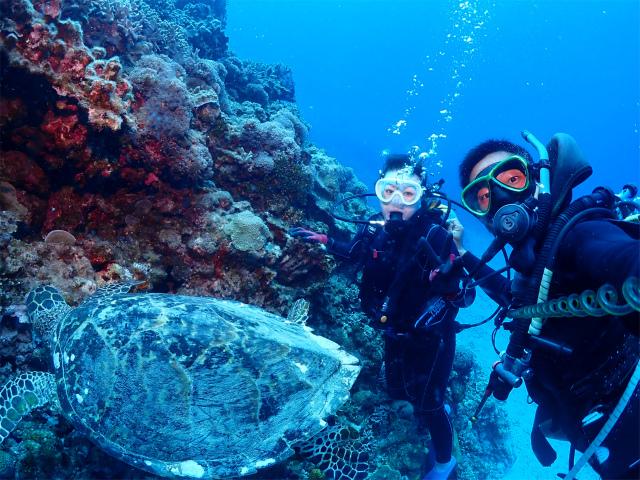 沖縄 ダイビング 慶良間 体験 ウミガメ