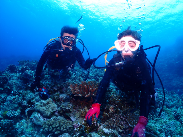 海 ダイビング ウミガメ 慶良間 沖縄