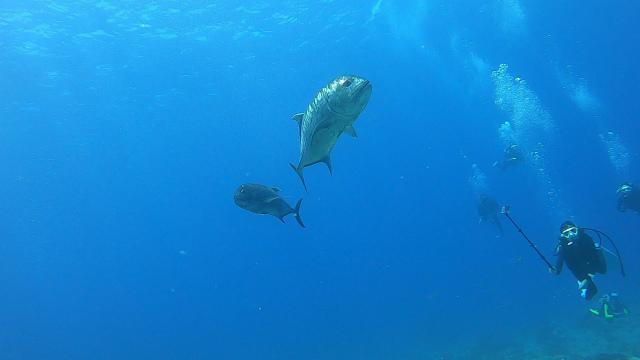 慶良間 沖縄 ダイビング 観光 体験