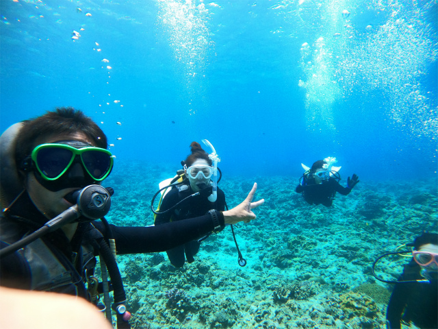 慶良間 沖縄 ダイビング 観光 ウミガメ