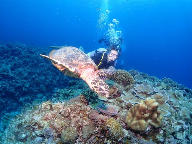 慶良間 ダイビング 沖縄 観光 水中