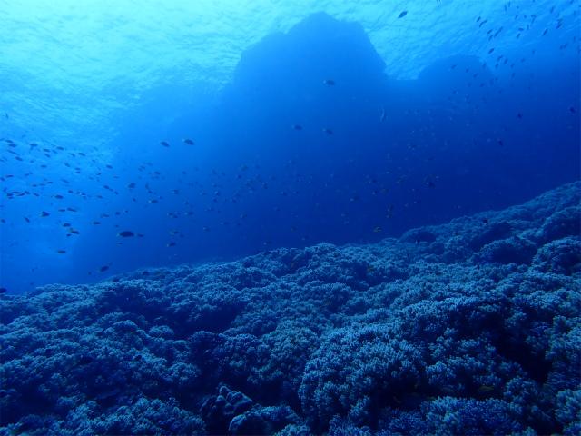 慶良間 沖縄 観光 ダイビング ライセンス