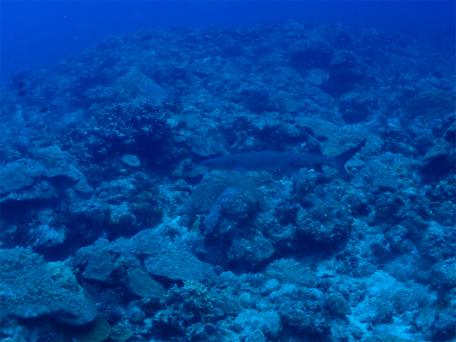 慶良間 沖縄 ライセンス ダイビング 海