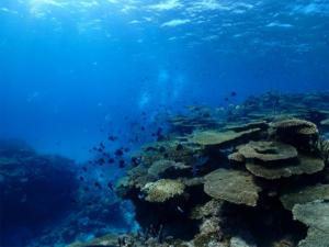 慶良間 チービシ ダイビング 沖縄 観光 diving