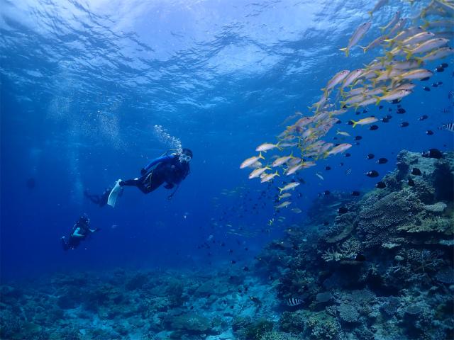 沖縄 ダイビング 慶良間 体験 チービシ