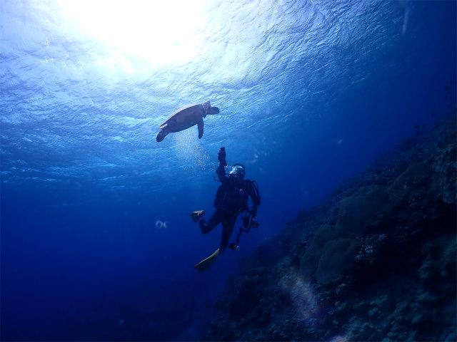 慶良間 ウミガメ ダイビング FUNダイブ 沖縄