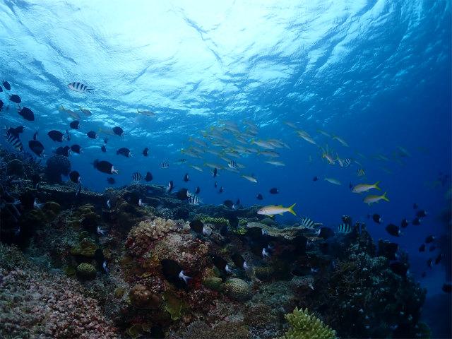 沖縄 ダイビング 慶良間 チービシ 体験
