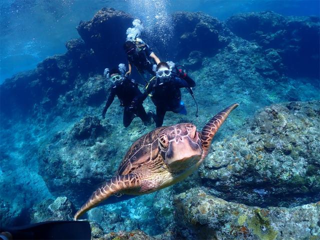 慶良間 ダイビング ウミガメ 沖縄 観光