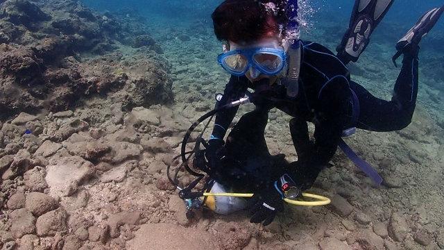 沖縄 ダイビング ライセンス 北谷 海